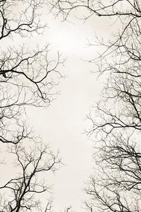 branchesの素材 [FYI00420838]