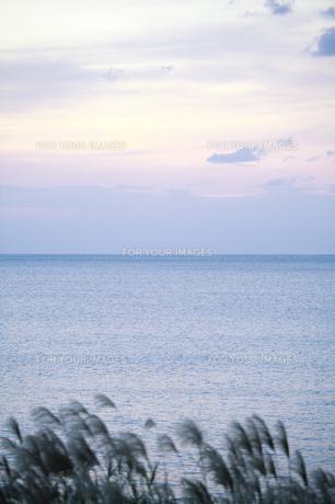 夕暮れ時の水平線とススキの素材 [FYI00420843]