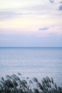 夕暮れ時の水平線とススキの写真素材 [FYI00420843]