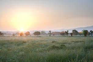 平城宮の日の出の写真素材 [FYI00420853]