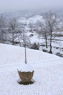雪の稲木の写真素材 [FYI00420854]