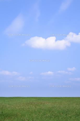 青空と草原の素材 [FYI00420857]