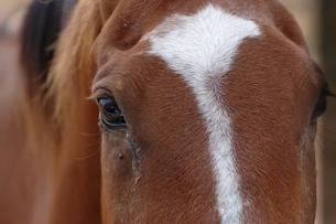 Horseの写真素材 [FYI00420934]