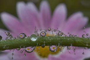 水滴に踊る花の写真素材 [FYI00420938]