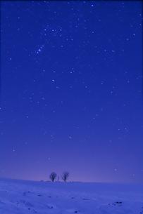 星空と親子の木の素材 [FYI00421013]