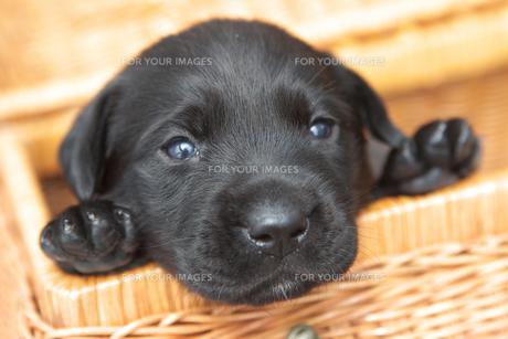 dog009の写真素材 [FYI00421089]