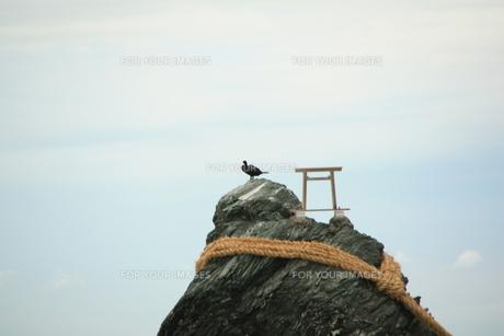夫婦岩と鳥の素材 [FYI00421152]