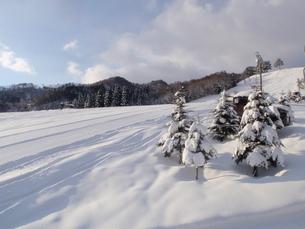 スキー場の写真素材 [FYI00421157]