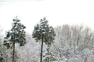 積雪の素材 [FYI00421169]