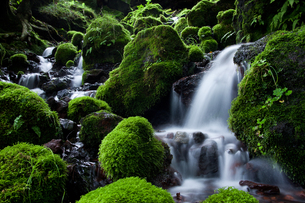 湧水点直下の苔岩の流れの写真素材 [FYI00421214]