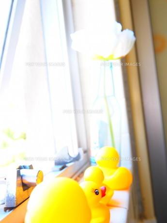 花とアヒルの親子の写真素材 [FYI00421221]