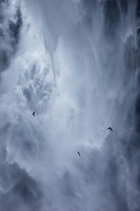 華厳の滝にイワツバメの素材 [FYI00421235]