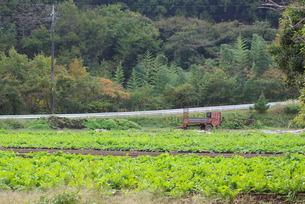 収穫を待つ畑の写真素材 [FYI00421257]