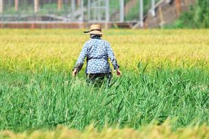 農作業をする人の写真素材 [FYI00421347]