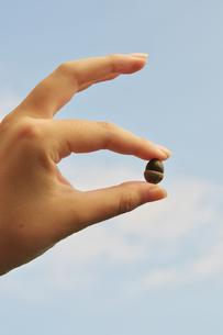 ドングリをつまむ手の写真素材 [FYI00421351]