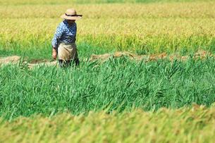 農作業をする人の写真素材 [FYI00421360]