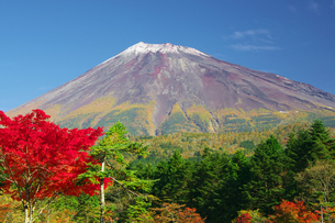 秋の富士山の写真素材 [FYI00421365]