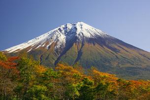富士山と紅葉の写真素材 [FYI00421367]