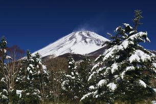 新雪の富士山の写真素材 [FYI00421392]