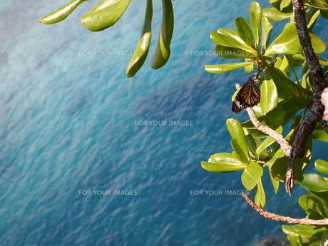海と蝶の素材 [FYI00421534]
