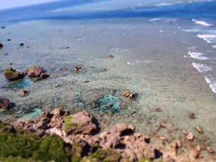 東平安名崎のサンゴ礁の素材 [FYI00421549]