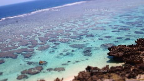 宮古島のサンゴ礁の素材 [FYI00421551]