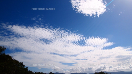 秋のうろこ雲の素材 [FYI00421568]