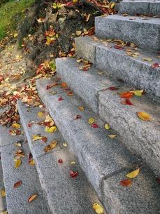落ち葉散る階段の写真素材 [FYI00421642]