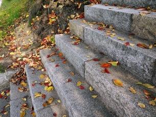 落ち葉散る階段の写真素材 [FYI00421643]