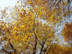 上野公園 秋の写真素材 [FYI00421726]
