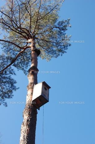 木と鳥の巣箱の素材 [FYI00421727]