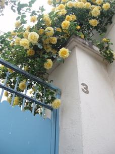 黄色バラの家の写真素材 [FYI00421734]