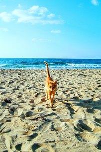 海から上陸した猫の素材 [FYI00421741]