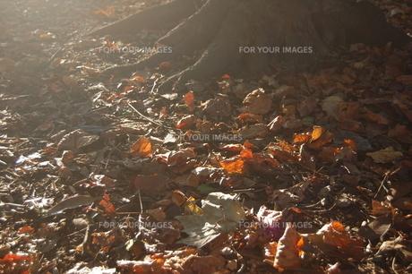 落ち葉と光の素材 [FYI00421744]