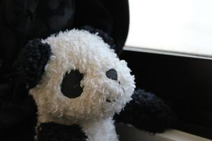 パンダのぬいぐるみの写真素材 [FYI00421867]