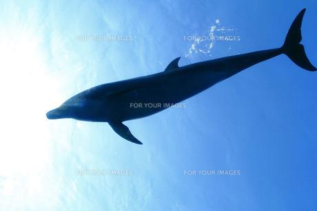 イルカの写真素材 [FYI00421971]