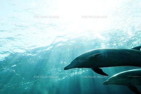 イルカの写真素材 [FYI00421973]