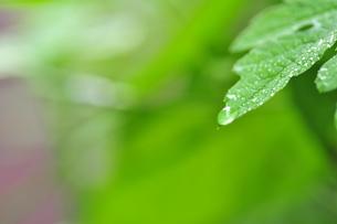 水滴の写真素材 [FYI00422034]