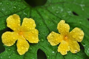 黄色い花の写真素材 [FYI00422042]