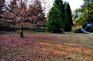 秋の公園の写真素材 [FYI00422091]