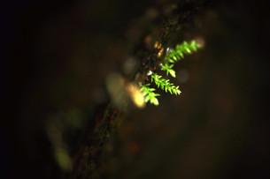 芽の写真素材 [FYI00422161]