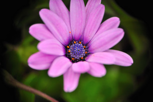 ピンクの写真素材 [FYI00422224]