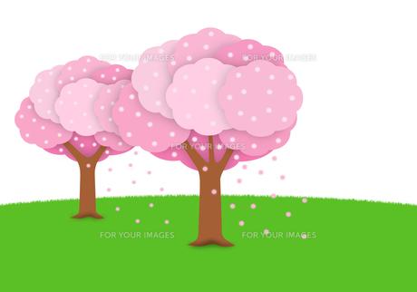 2本の桜の写真素材 [FYI00422289]