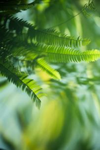 水面の葉の素材 [FYI00422459]