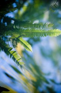 水面の葉の素材 [FYI00422460]