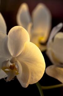 西日のあたる花の素材 [FYI00422463]