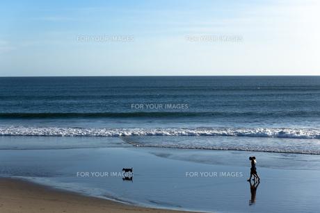 犬と散歩の素材 [FYI00422493]