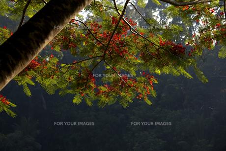朝の森の素材 [FYI00422501]