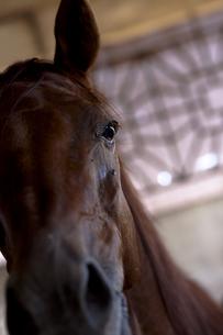 馬の素材 [FYI00422517]