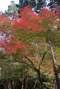 錦秋の京都の写真素材 [FYI00422591]